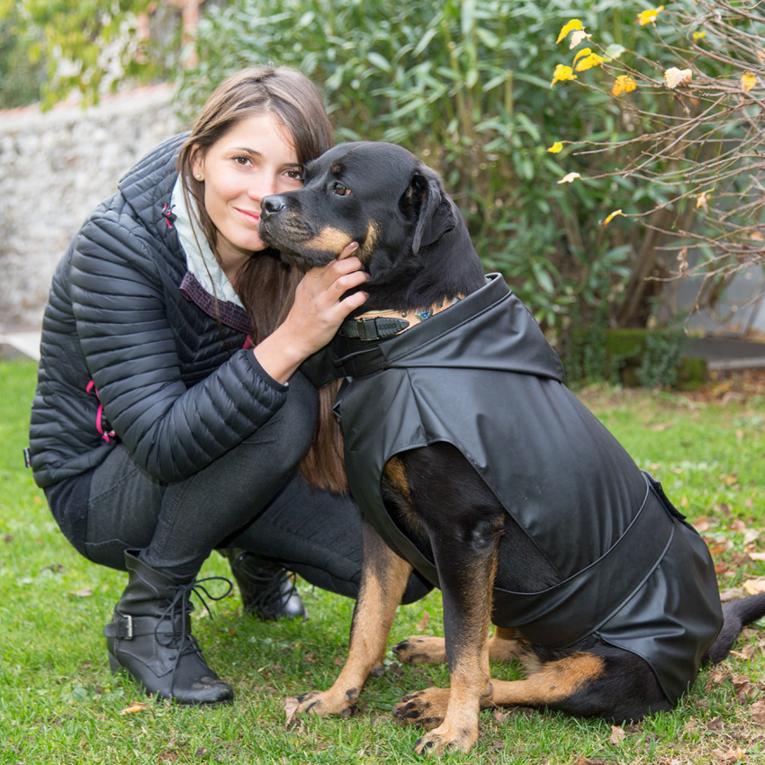 rottweiler breed dog sitting in the grass wearing ferplast trench black model waterproof and windproof coat
