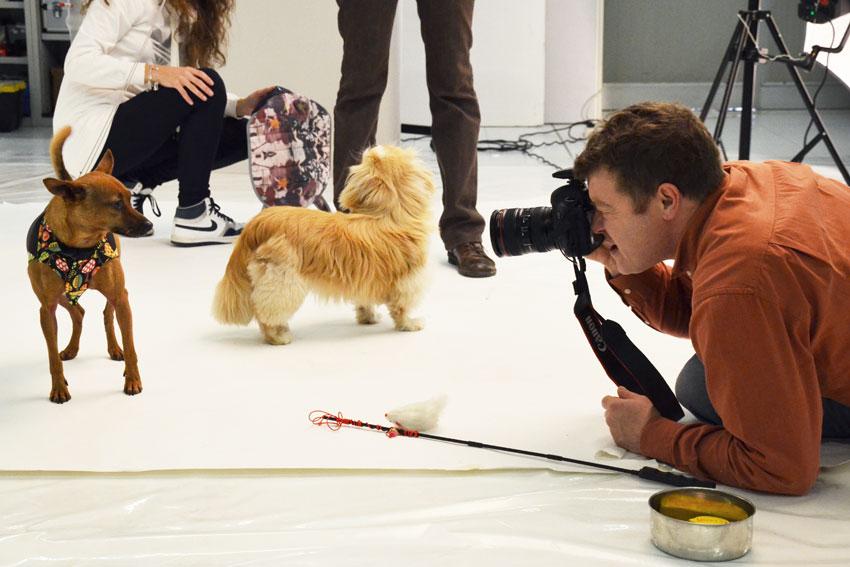 fotografo-vicenza-shooting-cane-animali