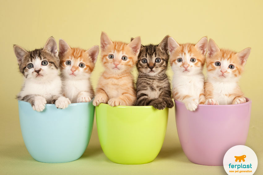 sei adorabili gattini dentro tre tazze colorate