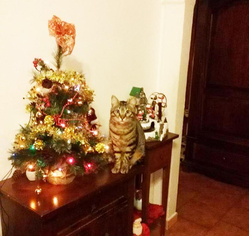 natal dos gatos