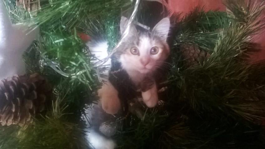 um gato dentro um árvore de Natal