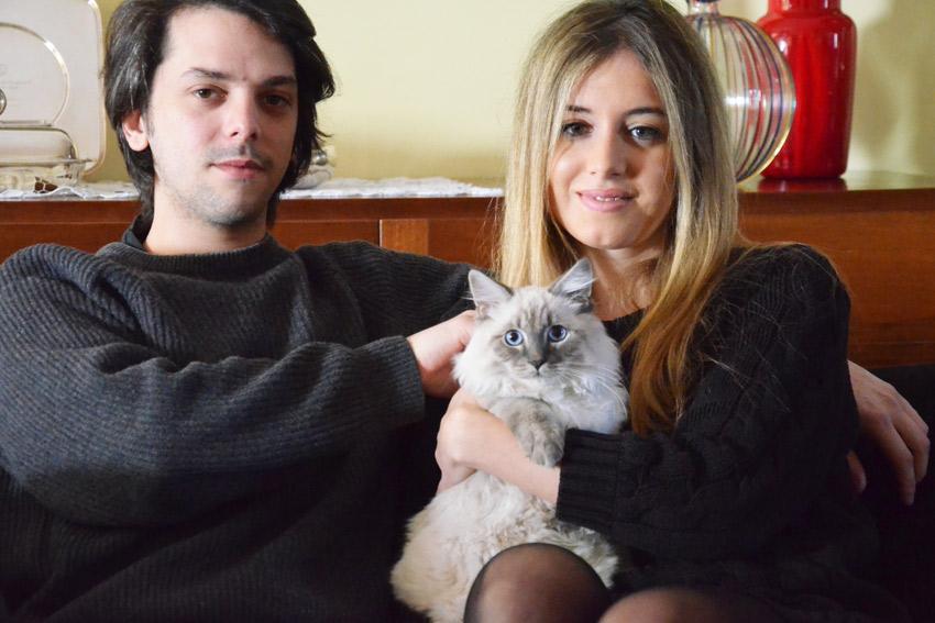 сибирские гипоаллергенные кошки