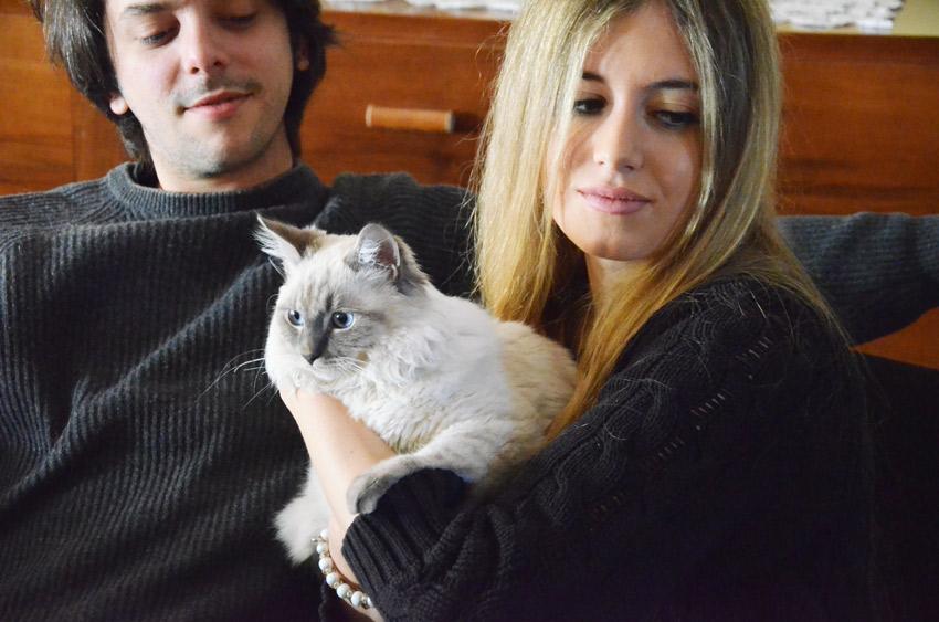 gatto-persone-allergiche