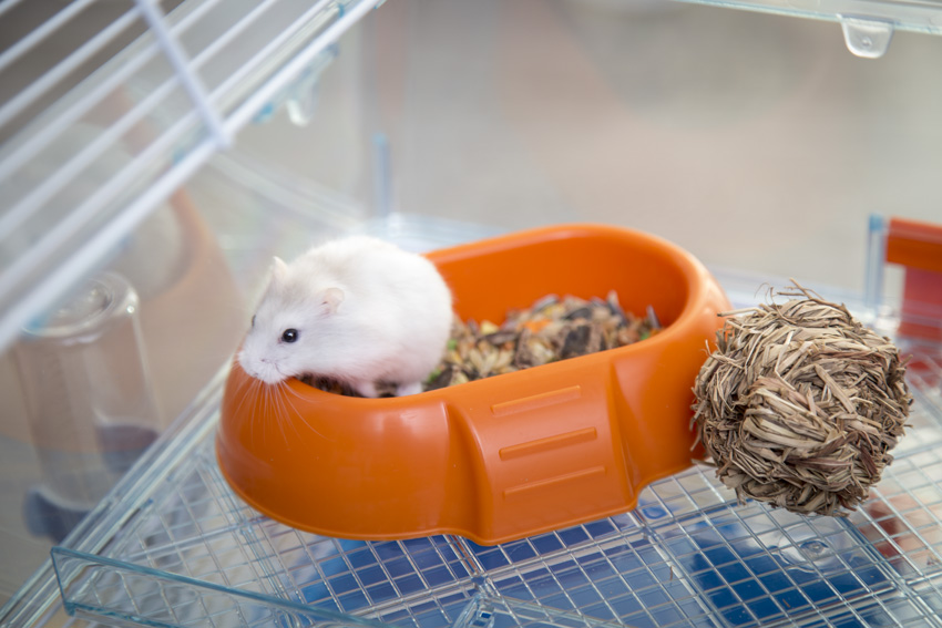 lovable hamster inside a hamster feeder