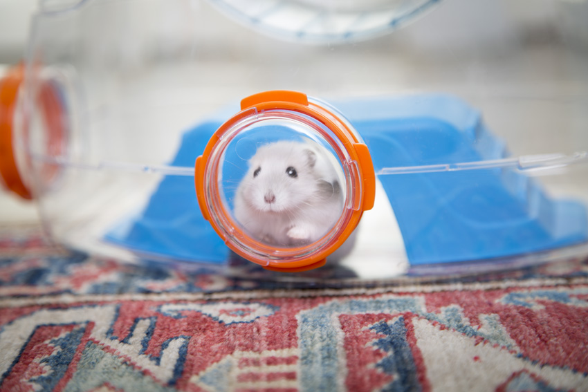 cute little hamster watching from a port-hole