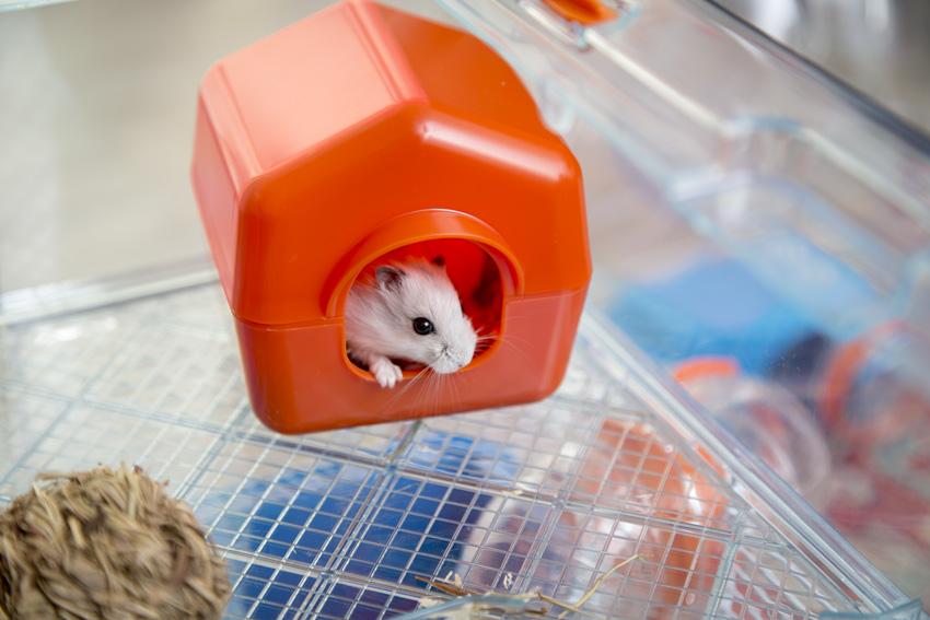 casetta per nido per criceti con criceto che sbircia dall'entrata