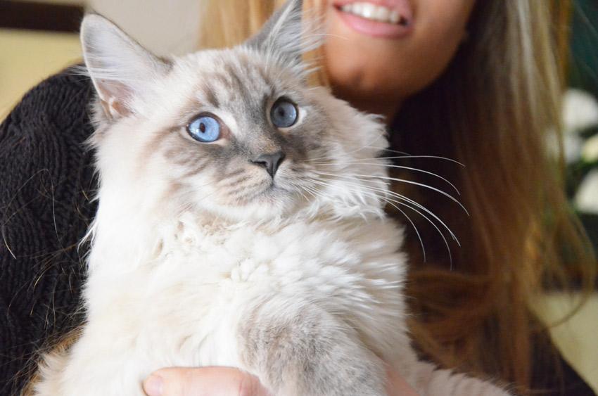 occhi-gatto-siberiano