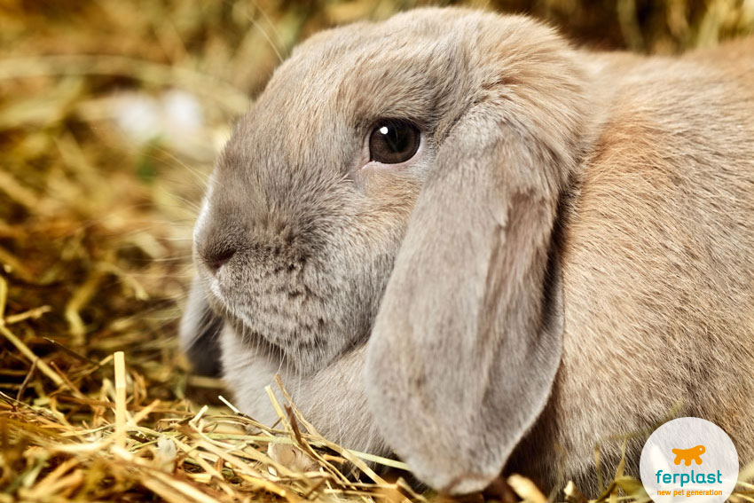 scared rabbit on the hay