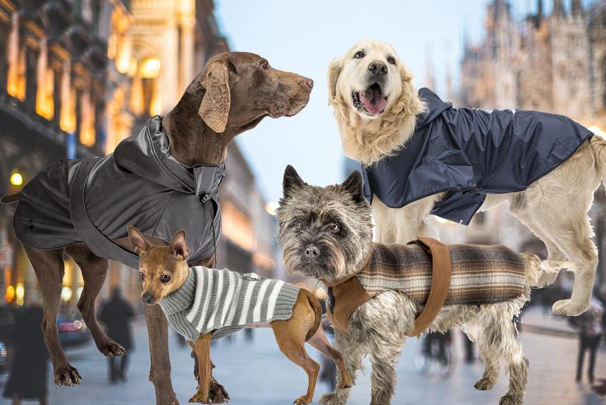 abbigliamento-cani-animali
