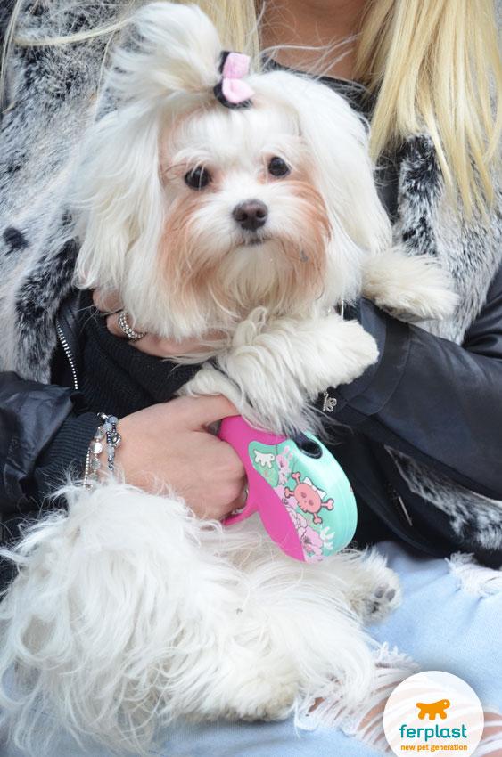 abbigliamento-cani-piccola-taglia