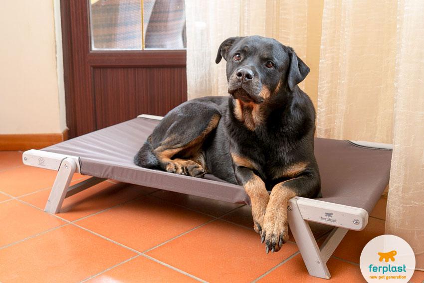 cane di razza Rottweiler che riposa su brandina Dreamwood di Ferplast