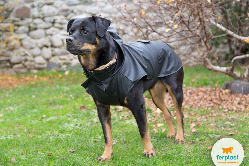 cane di razza Rottweiler con cappotto impermeabile Trench Black di Ferplast