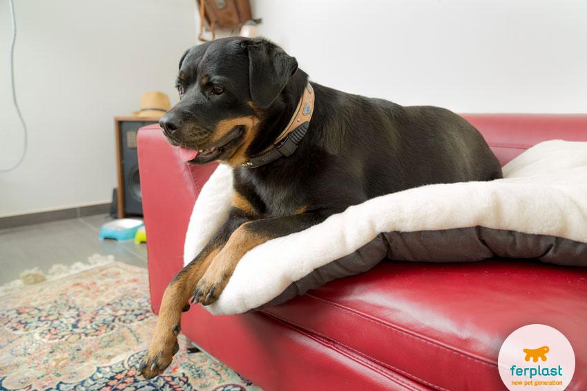 cane di razza Rottweiler sdraiato sul cuscino Relax F di Ferplast