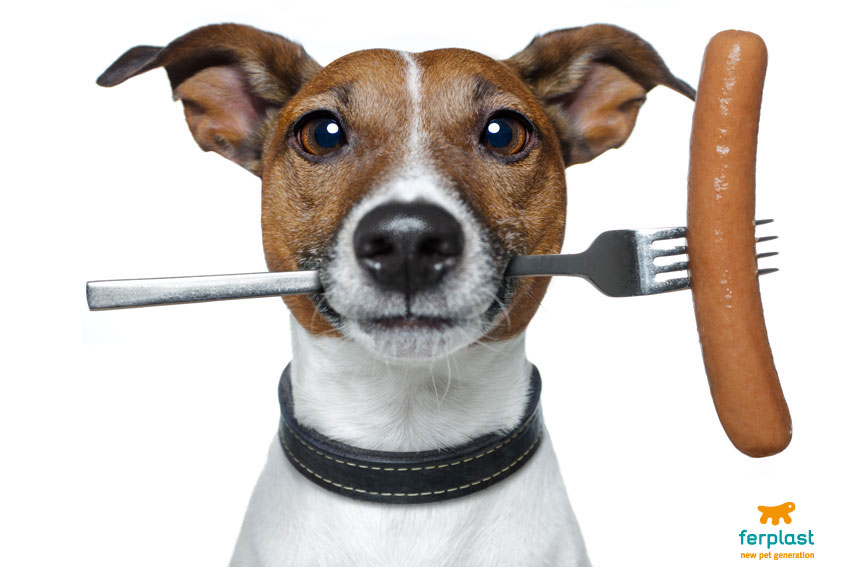 What foods are bad for dogs? All our unwitting mistakes