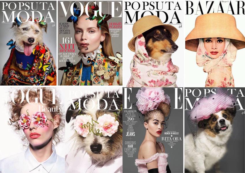moda e cães