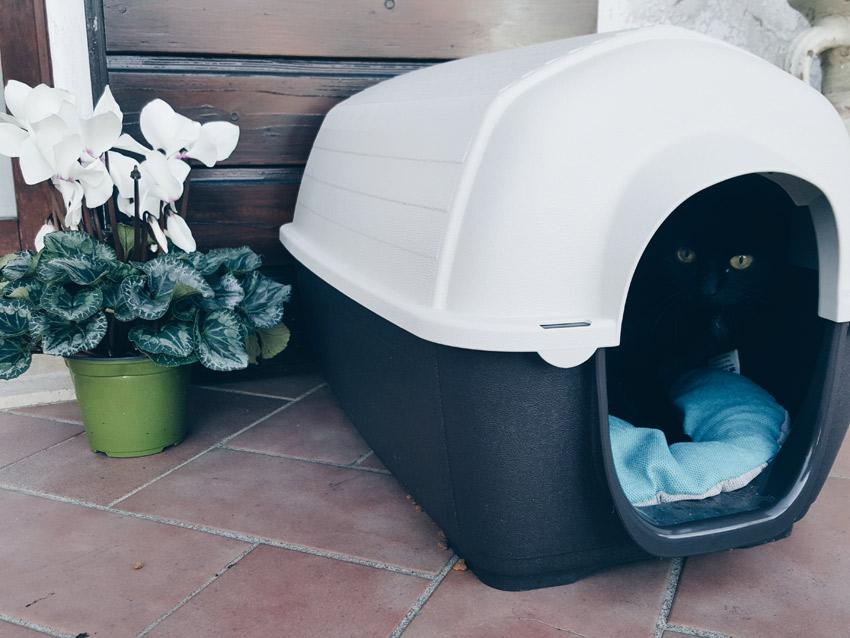 come-proteggere-gatto-freddo
