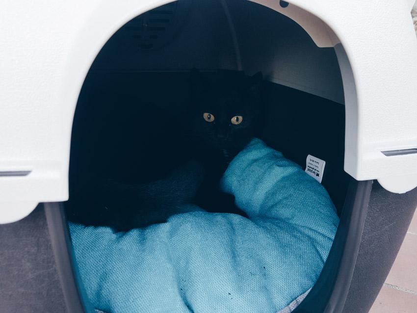 Proteggi il gatto in giardino scopri le nostre casette for Il gatto inverno