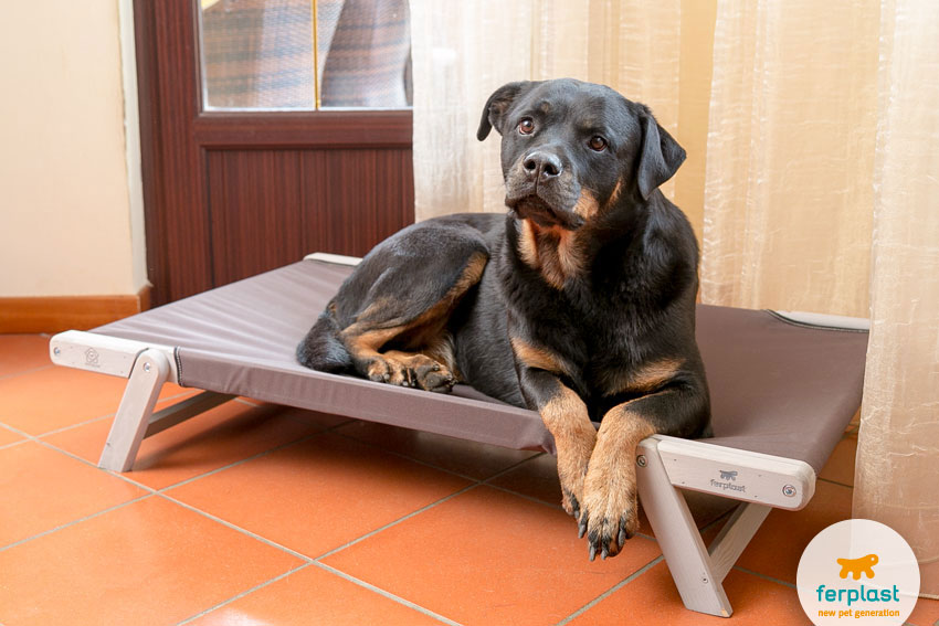 Rottweiler dog lying on Ferplast Dreamwood model dog bed