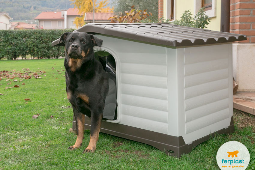 Rottweiler dog inside Ferplast Dogvilla model plastic kennel