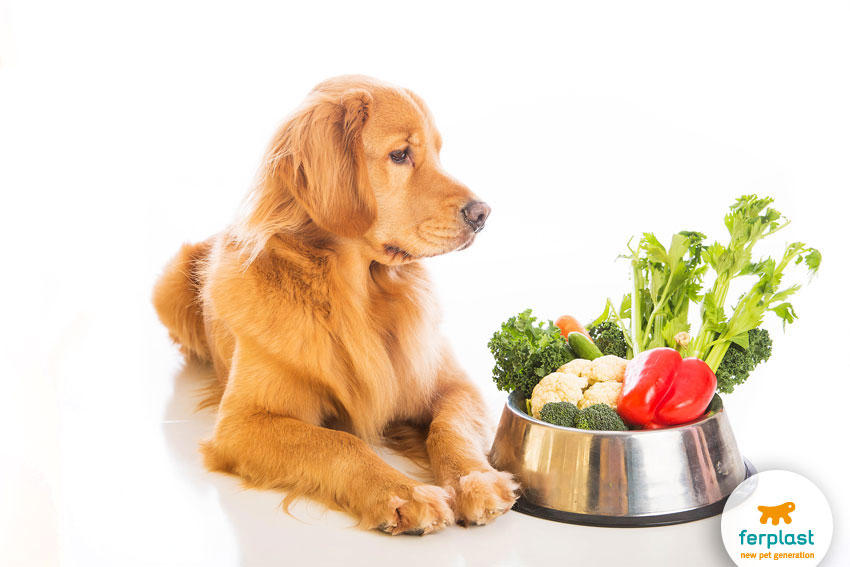 a dog with a bowl filled with vegetables
