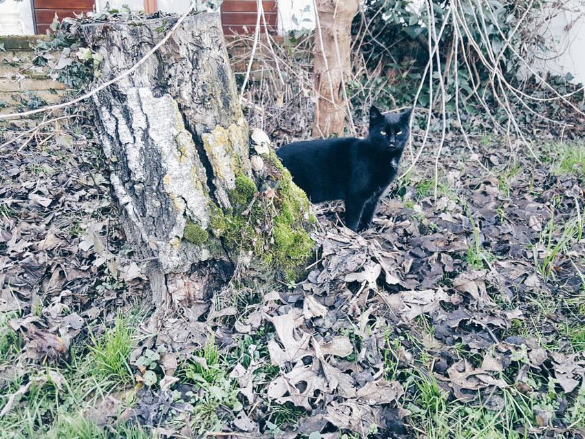 gatto-nero-giardino-ferplast-blog