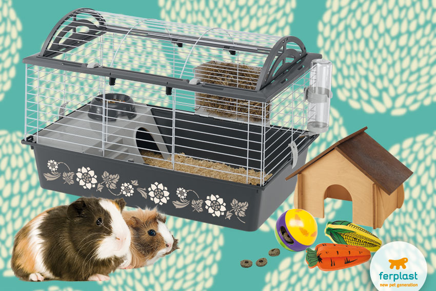Ferplast cage and accessories for guinea pigs
