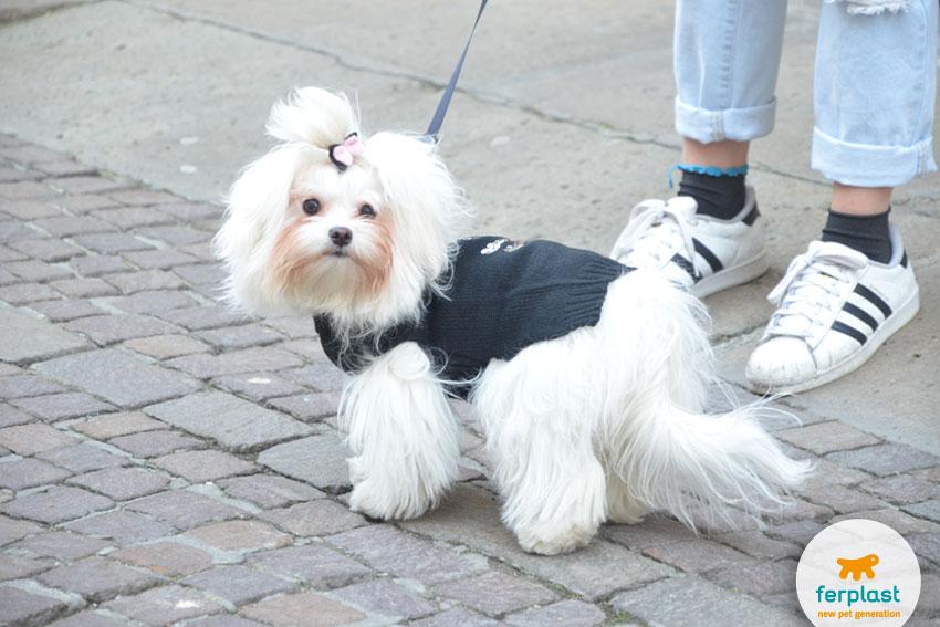 maglione-lana-cane-taglia-piccola