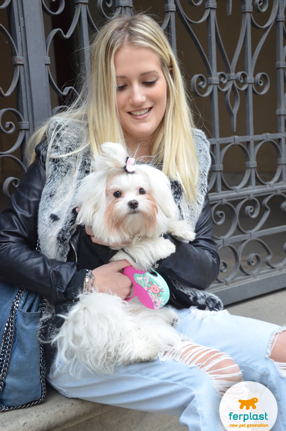 nicole-traverso-trilly-cane-maltese