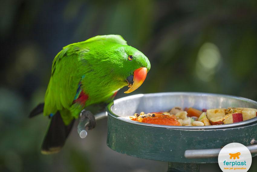 pappagallo appollaiato su una mangiatoia che guarda il cibo con indecisione