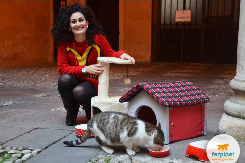 aiutare-gatti-randagi