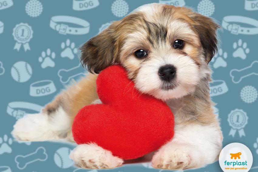 adorabile cagnolino con peluche a forma di cuore rosso