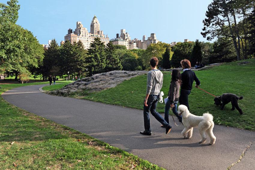 cani-central-park-new-york