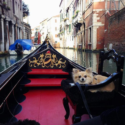 cani-venezia