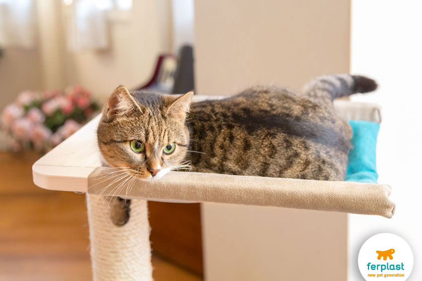 cute adorable cat lying on a hammock on the top of a cat tree