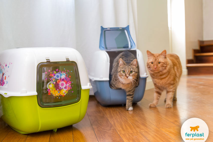 two cats with two litter boxes