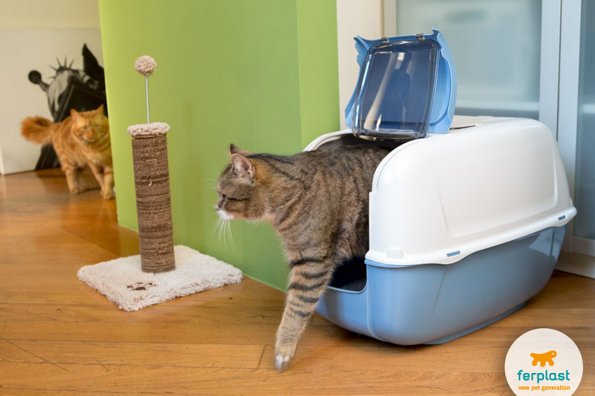 Prima Cabrio litter box by Ferplast and a scratching post