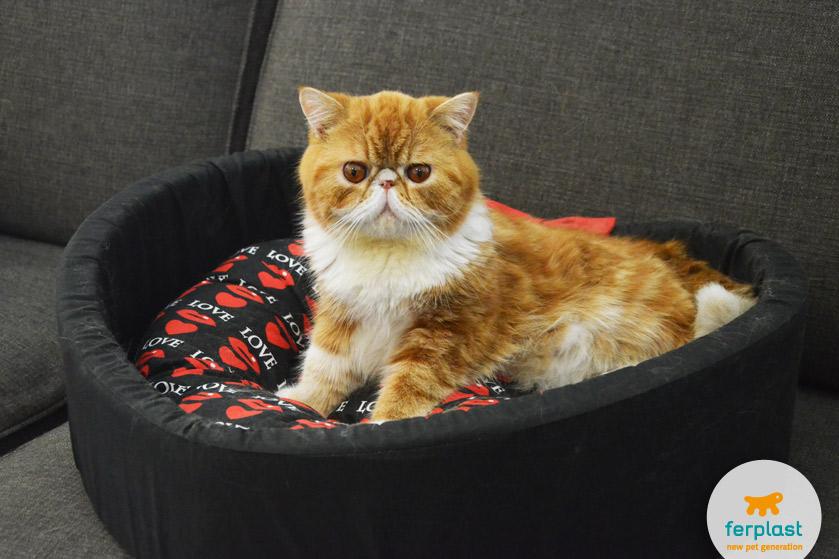 cama para gatos da ferplast