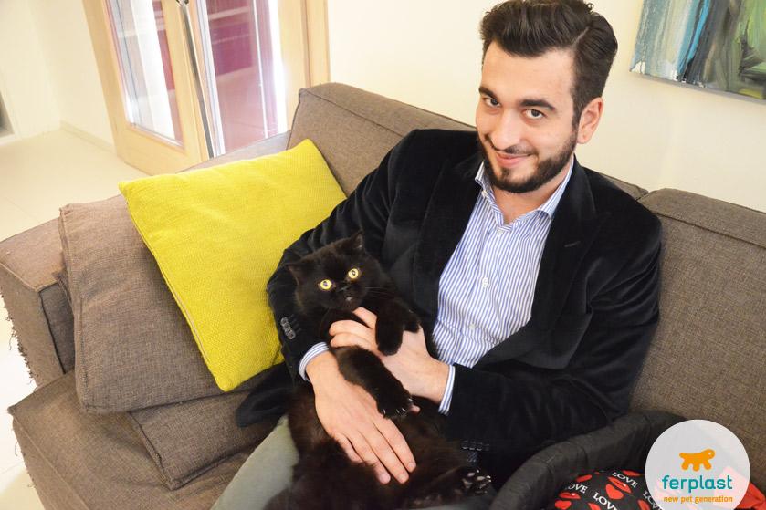 adoravel gato de pelo longo persa preto