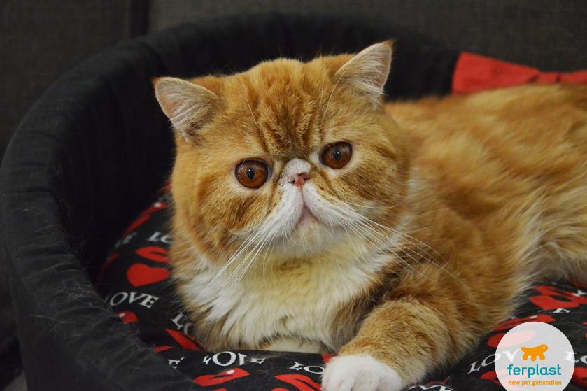 Problemi Di Gelosia Tra Gatti Ad Ognuno La Sua Ciotola Per Gatti