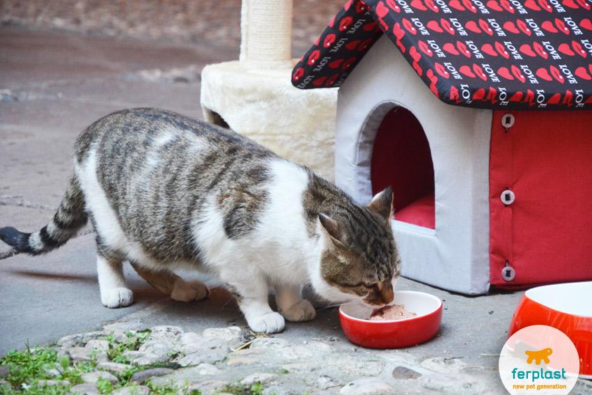 gatto-romeo-comune-vicenza