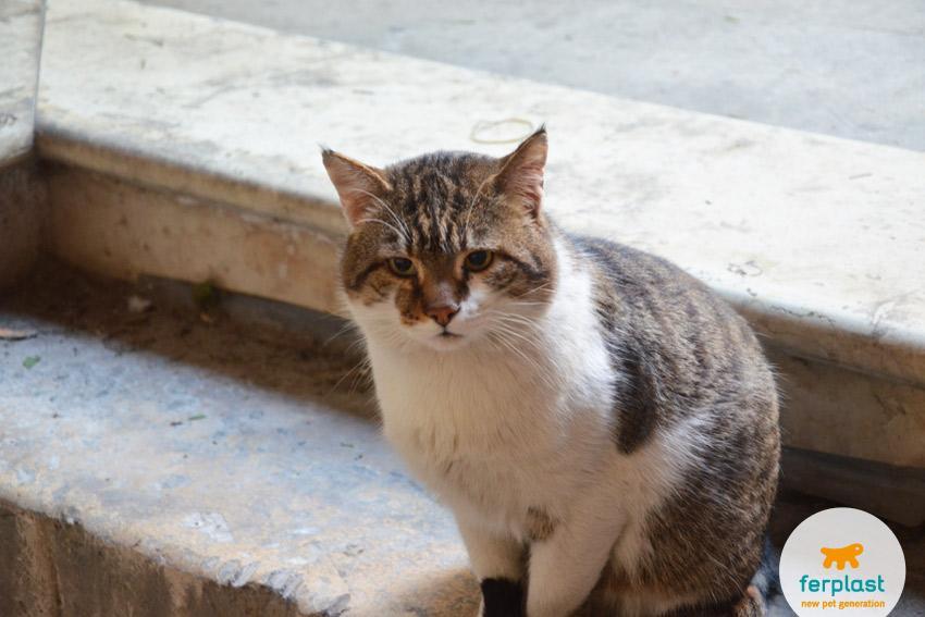 gatto-romeo-sindaco-vicenza