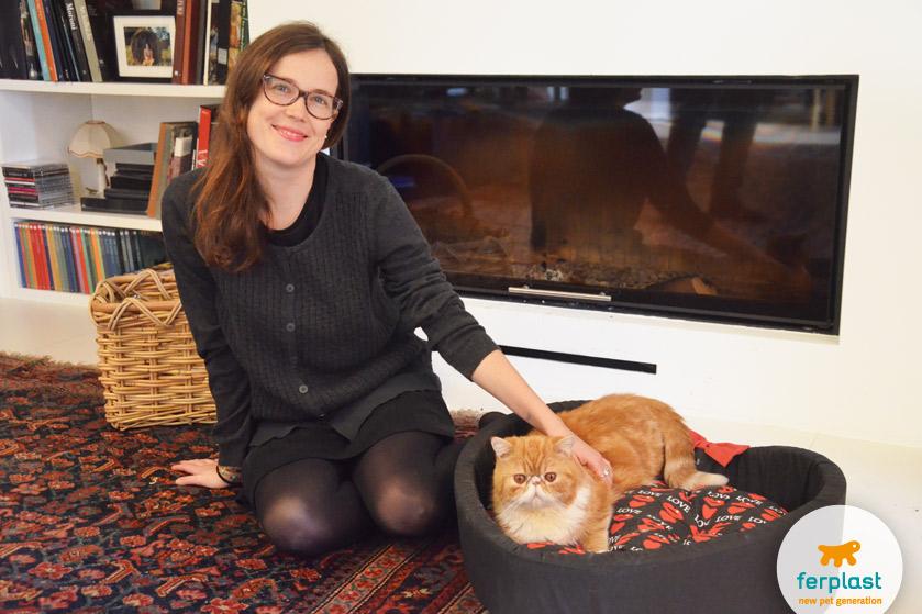 gato persa vermelho