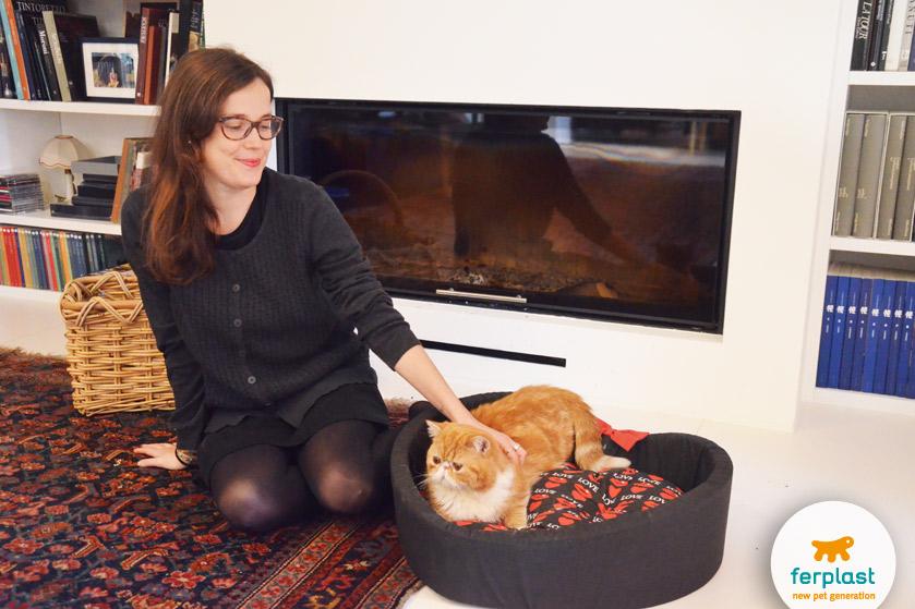 gatto persiano rosso dentro una cuccia per gatti