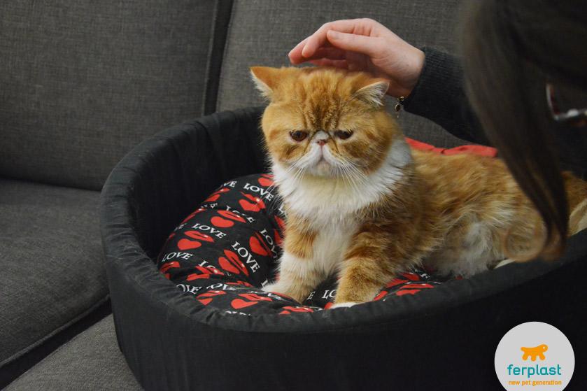 gato persa vermelho em uma cama para gatos