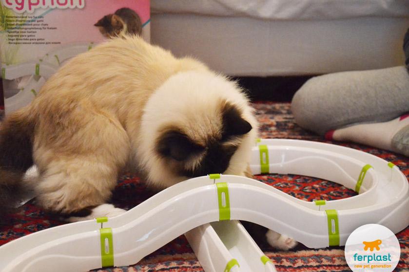 typhone-ferplast-cat-game-gioco
