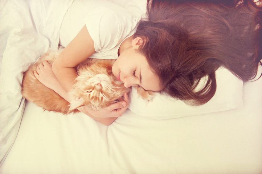 dormir com o seu gato
