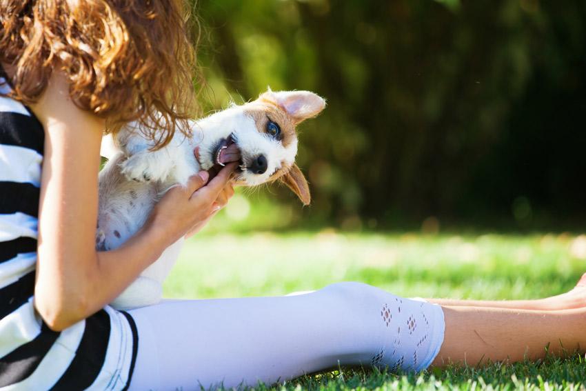Por que seu cão morde suas mãos