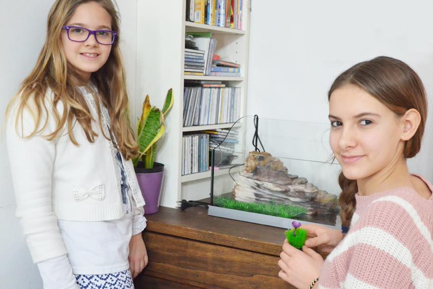 como deixar um aquário para tartarugas