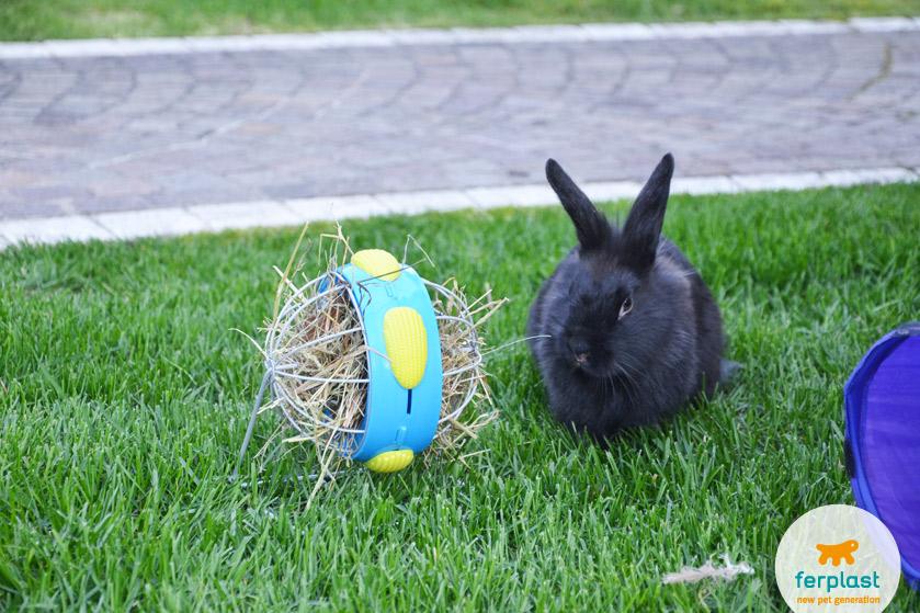 come-tenere-coniglio-giardino