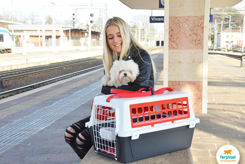 come-viaggiare-col-cane